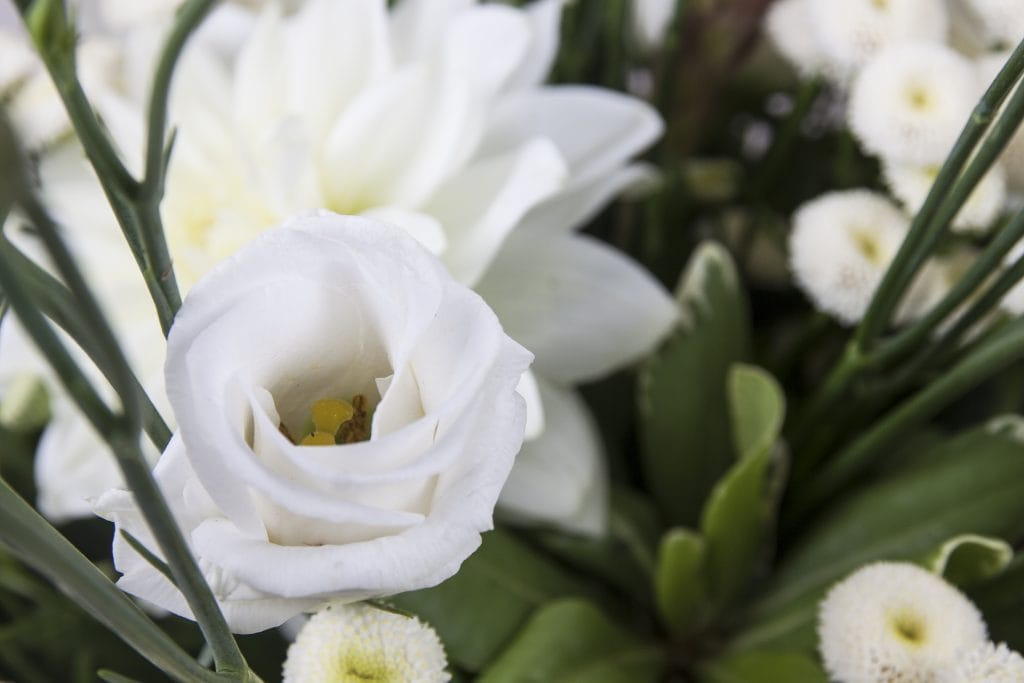 lisianthus white eustoma holland flowerwiki holex flower blog