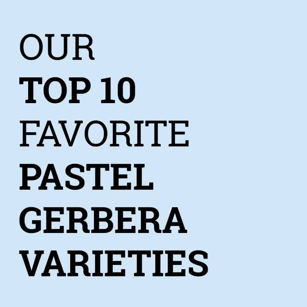 Top 10 Favorite Pastel Gerbera Varieties