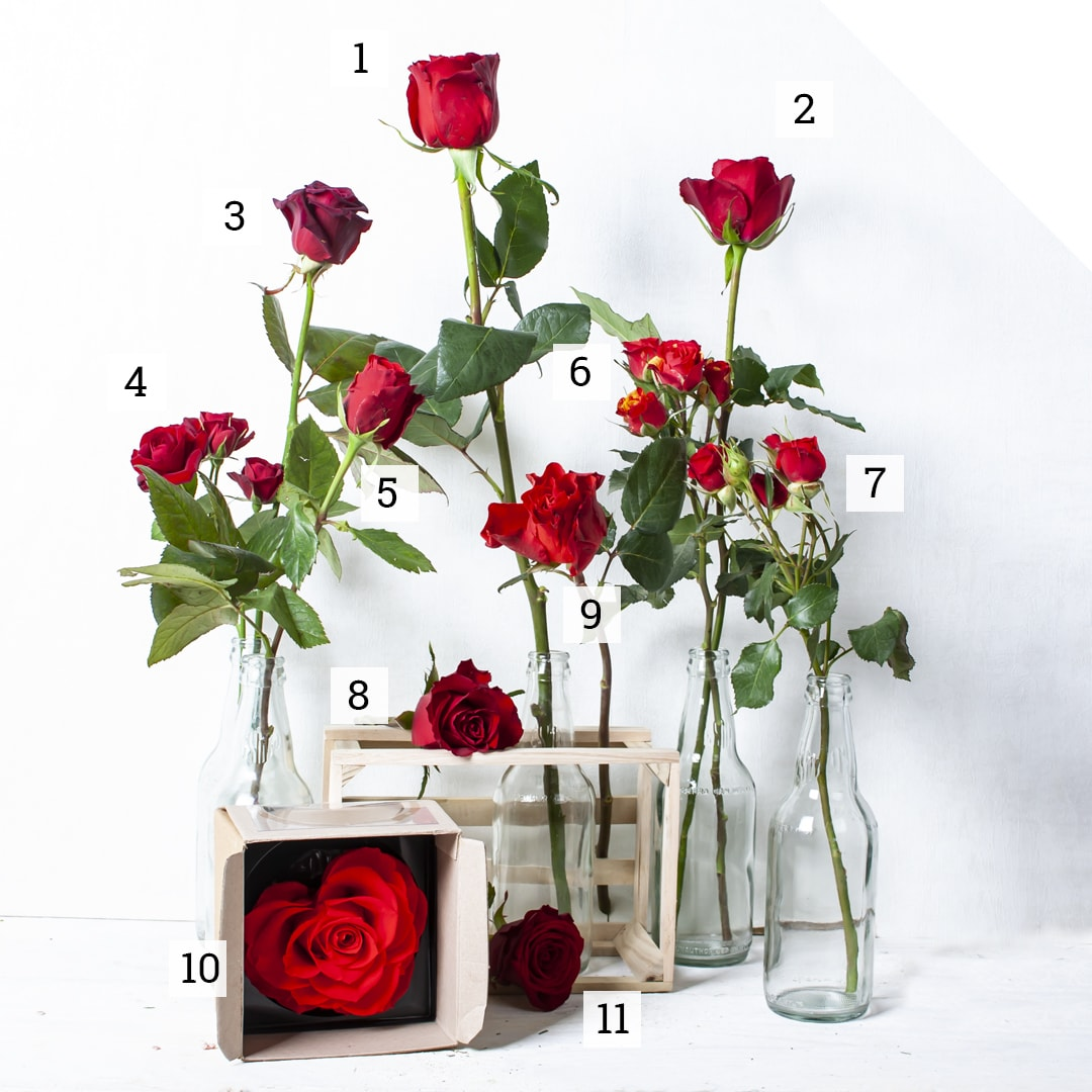 Numbered list of trendy Valentine roses of 2019