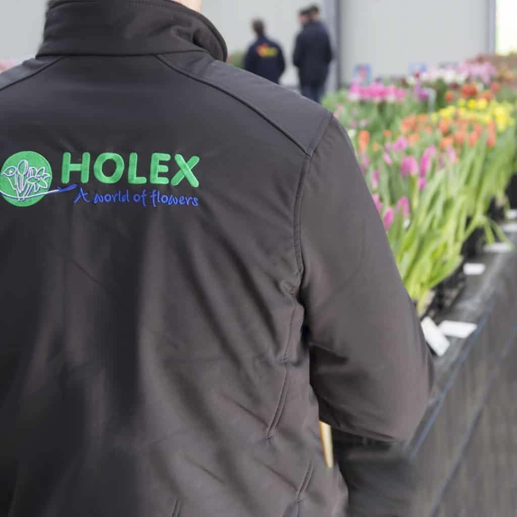 Holex on The Lookout: New Tulip Varieties | Holex Flower