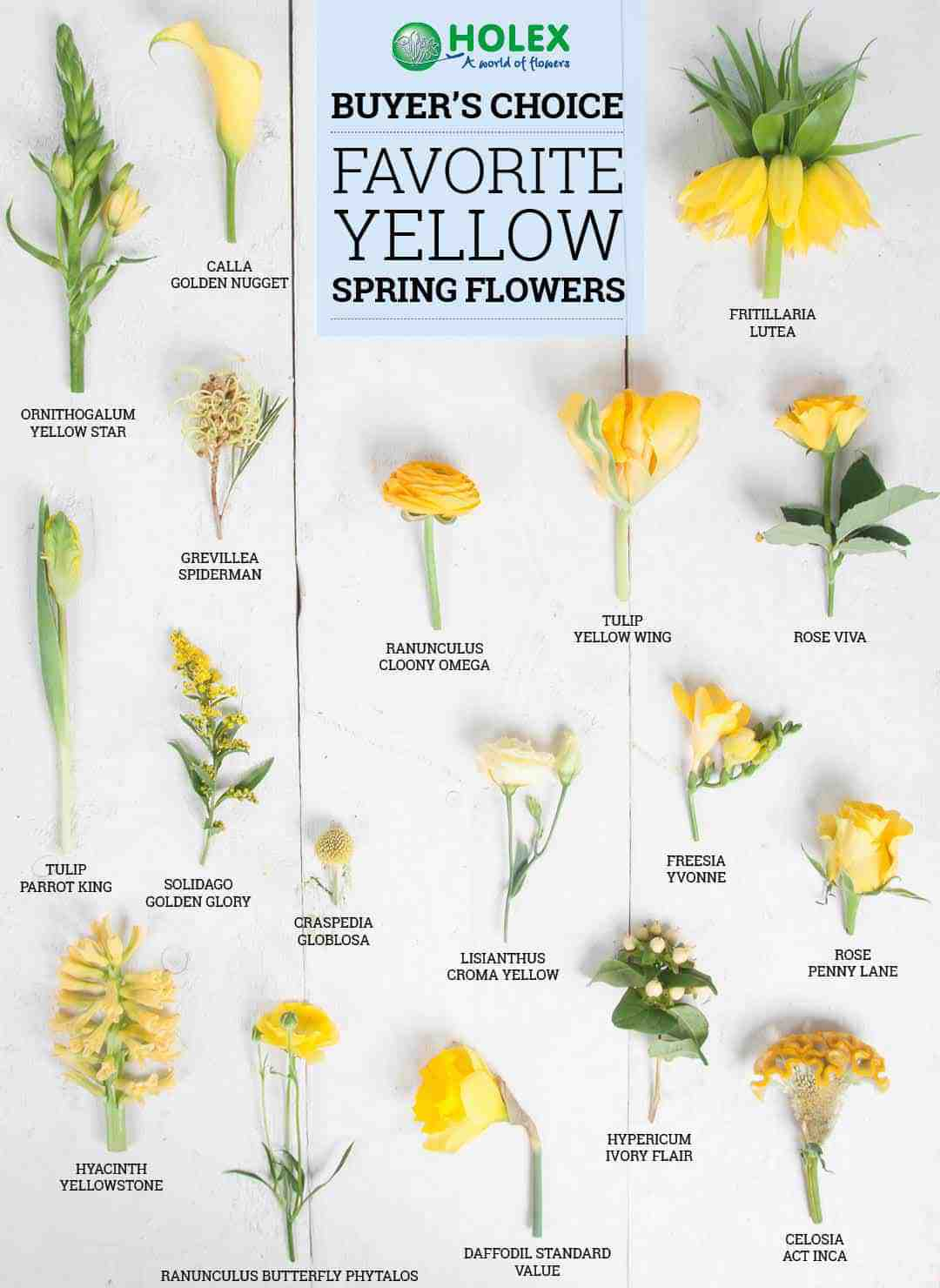 Favorite Yellow Spring Flowers | Holex Flower