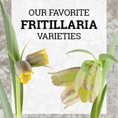 Favorite Fritillaria Varieties 2018
