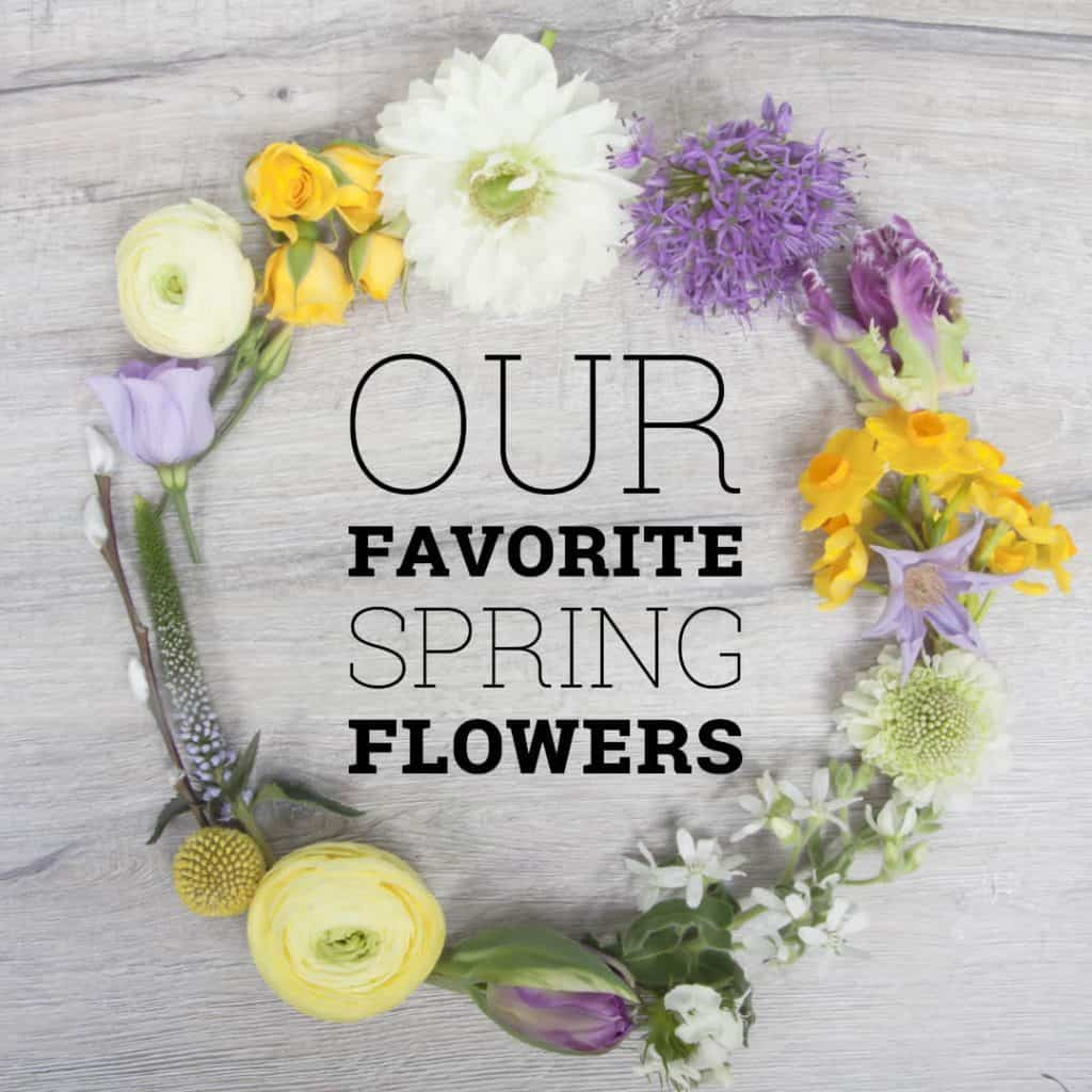 Favorite Spring Flowers | Holex Flower
