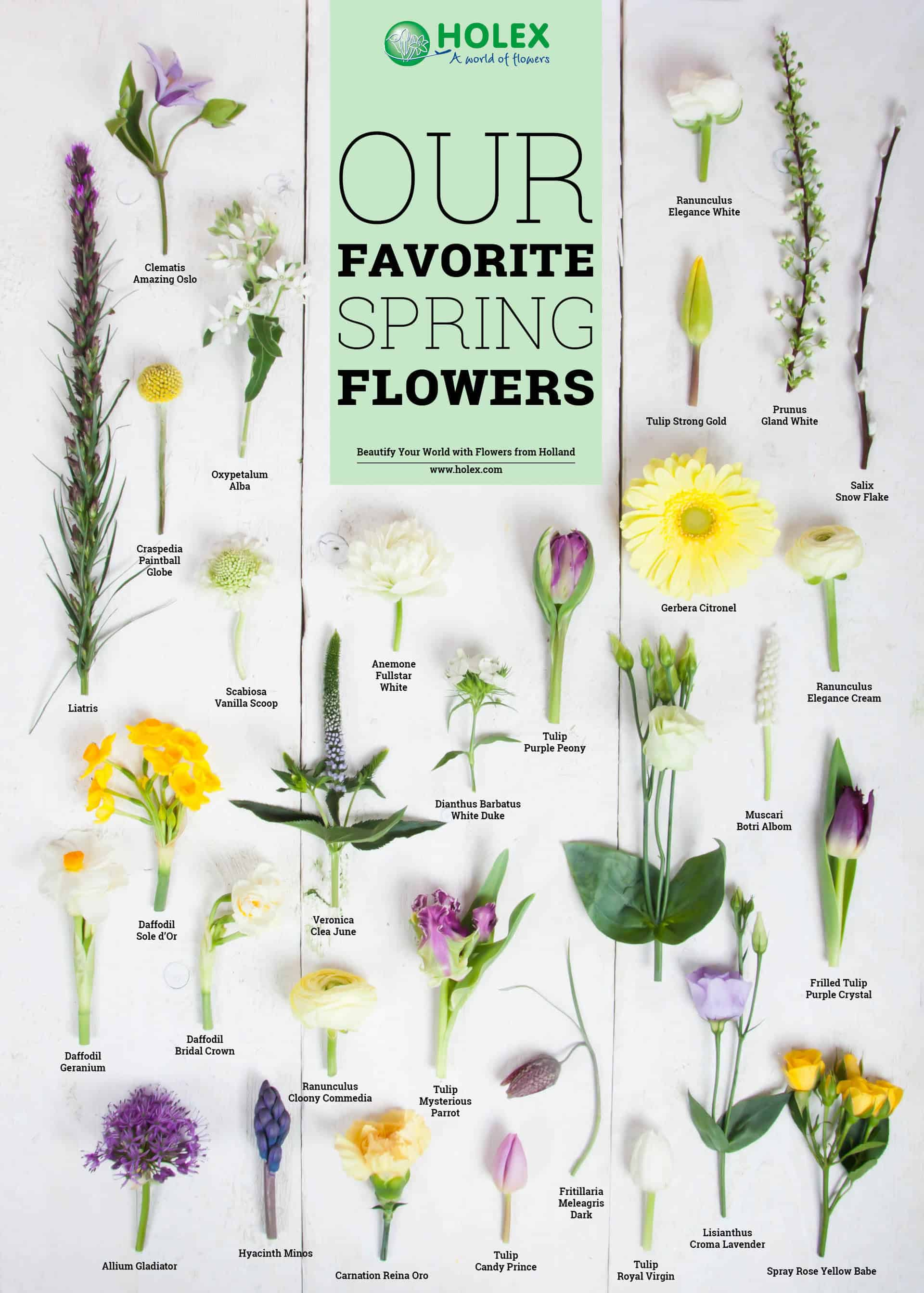 Favorite Spring Flowers 2018 | Holex Flower