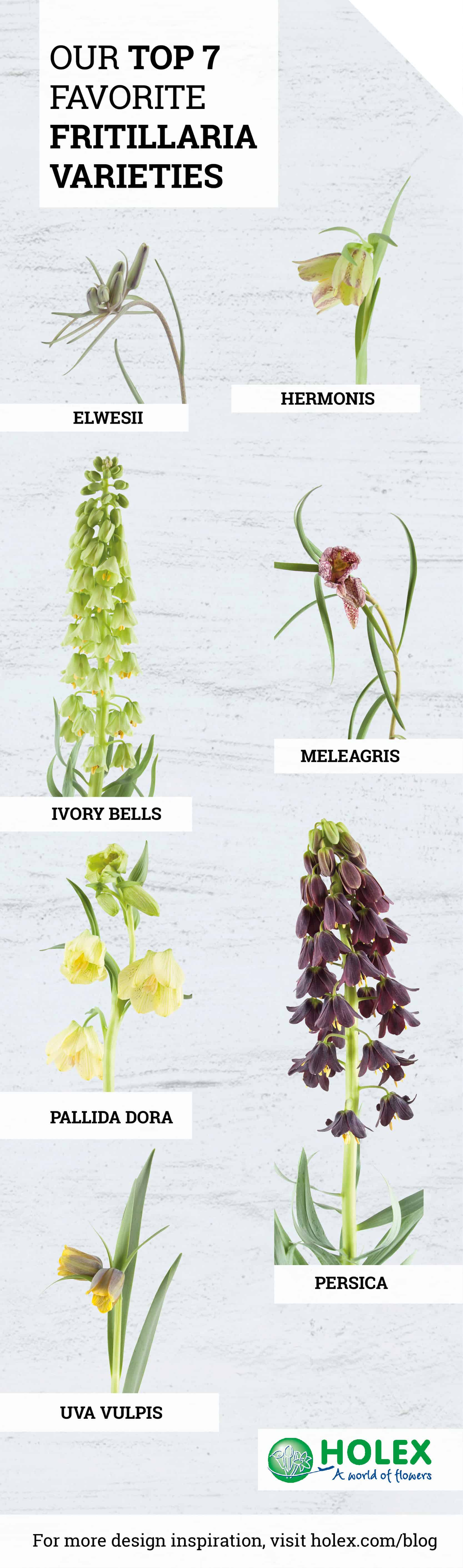 Top 7 Fritillaria varieties