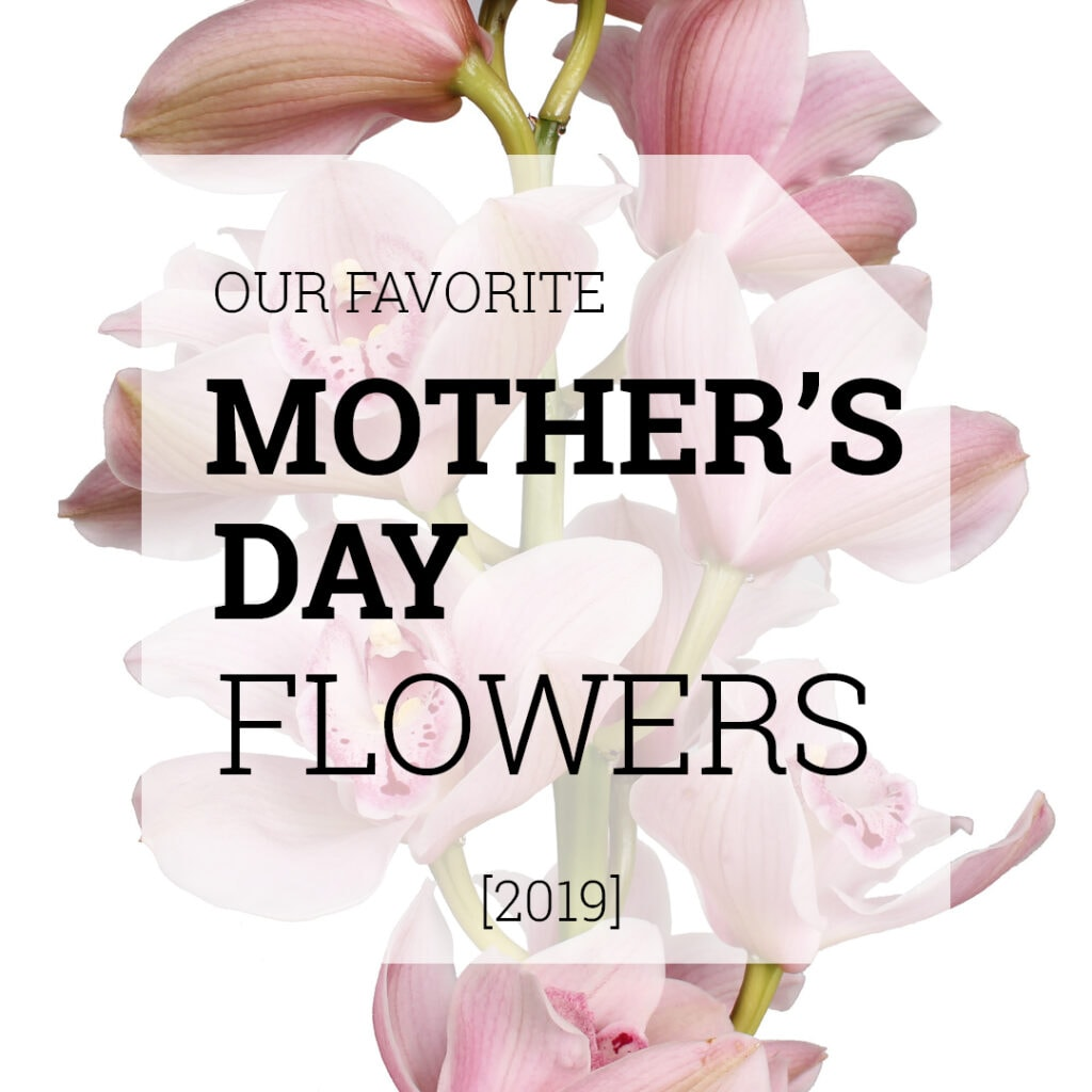 Favorite Mothers Day Flowers | Holex Flower