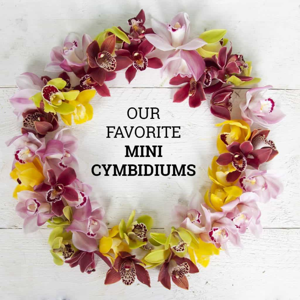 Our Favorite Spring Mini Cymbidiums