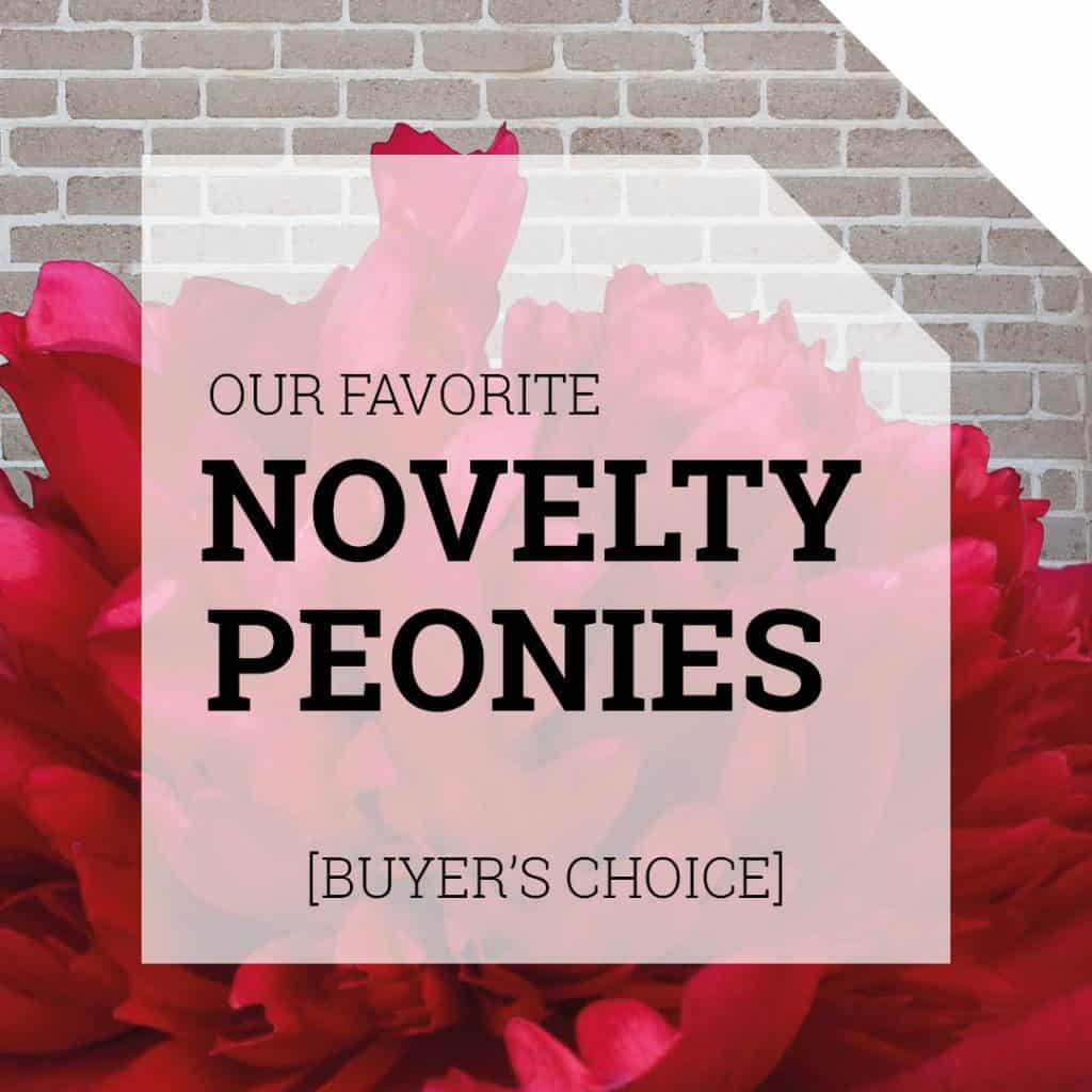 Beautiful Peony Novelties