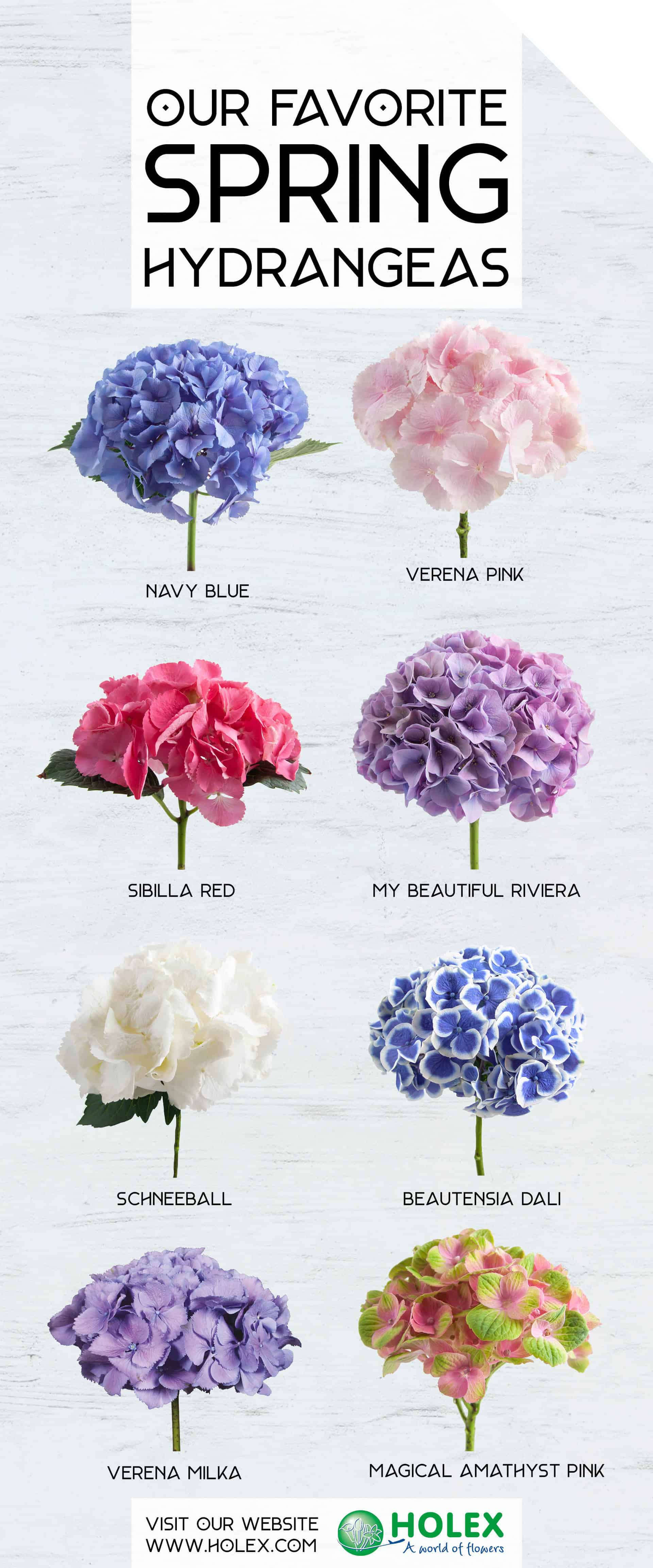 Our Favorite Spring Hydrangeas 2018