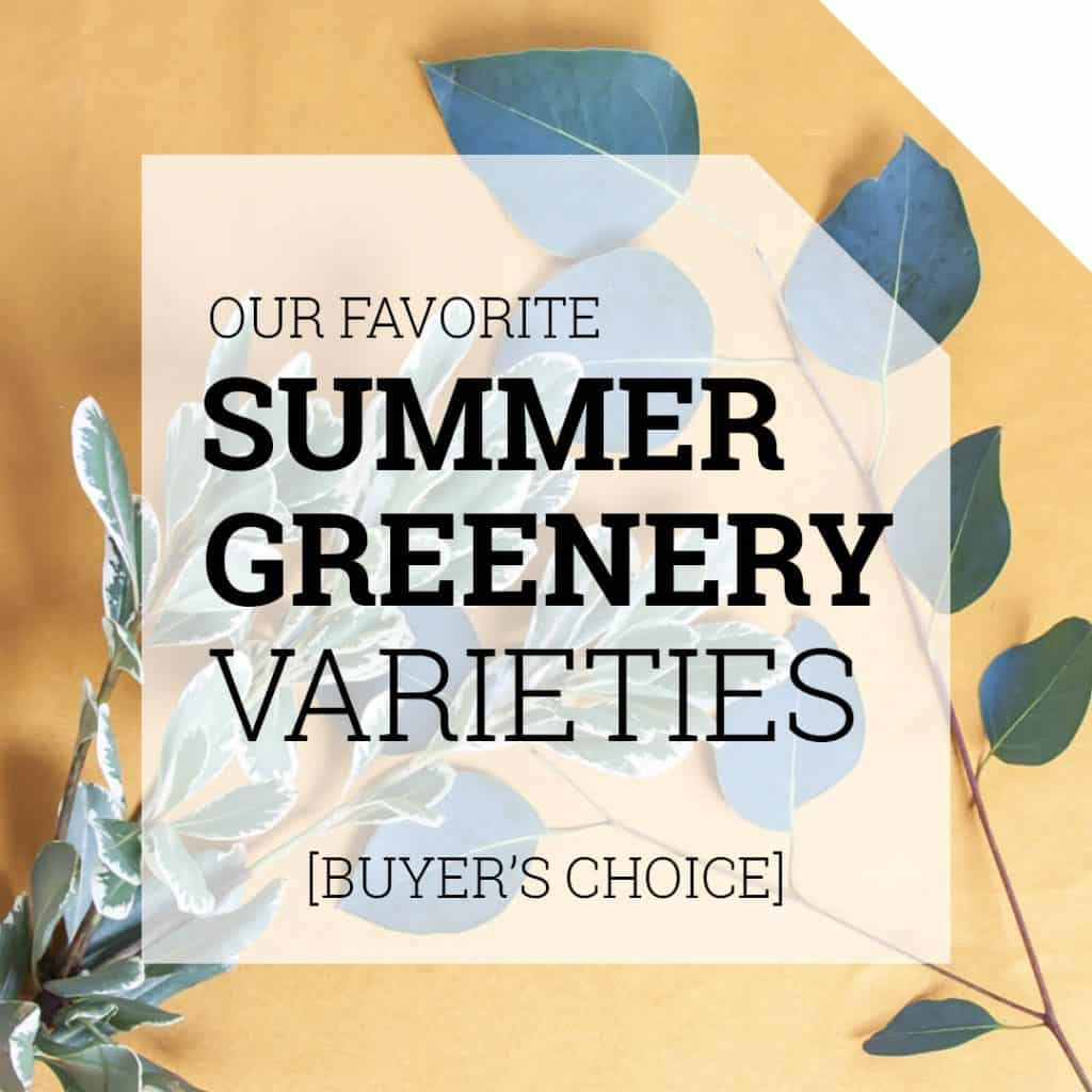 Our Favorite Summer Greenery Varieties