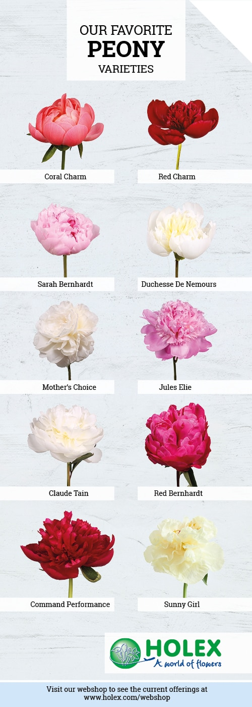 Favorite Peony Varieties 2018 | Holex Flower