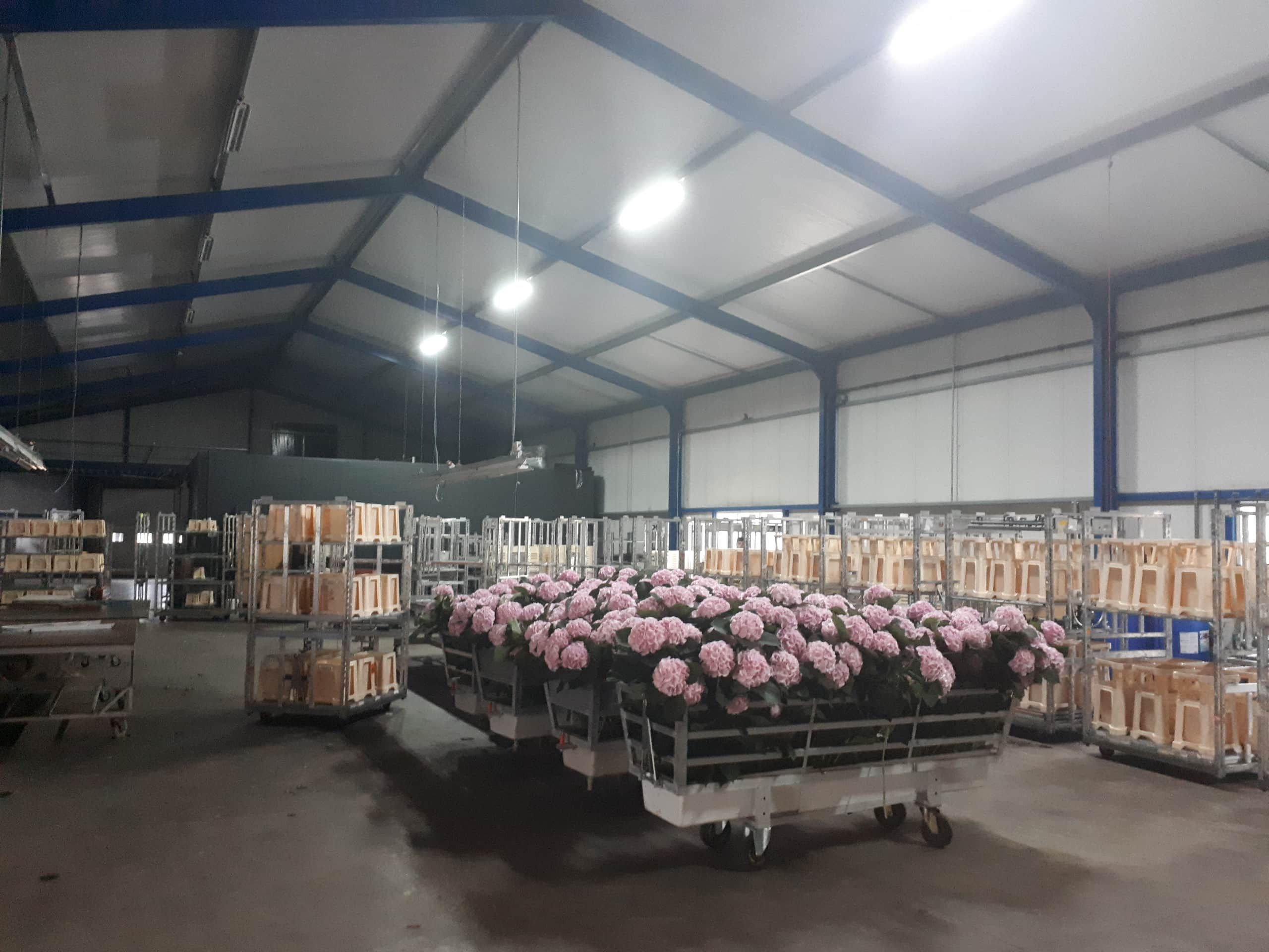 Queens Flowers Production Area