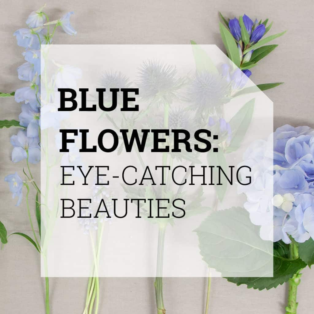 Blue Flowers | Holex Flower