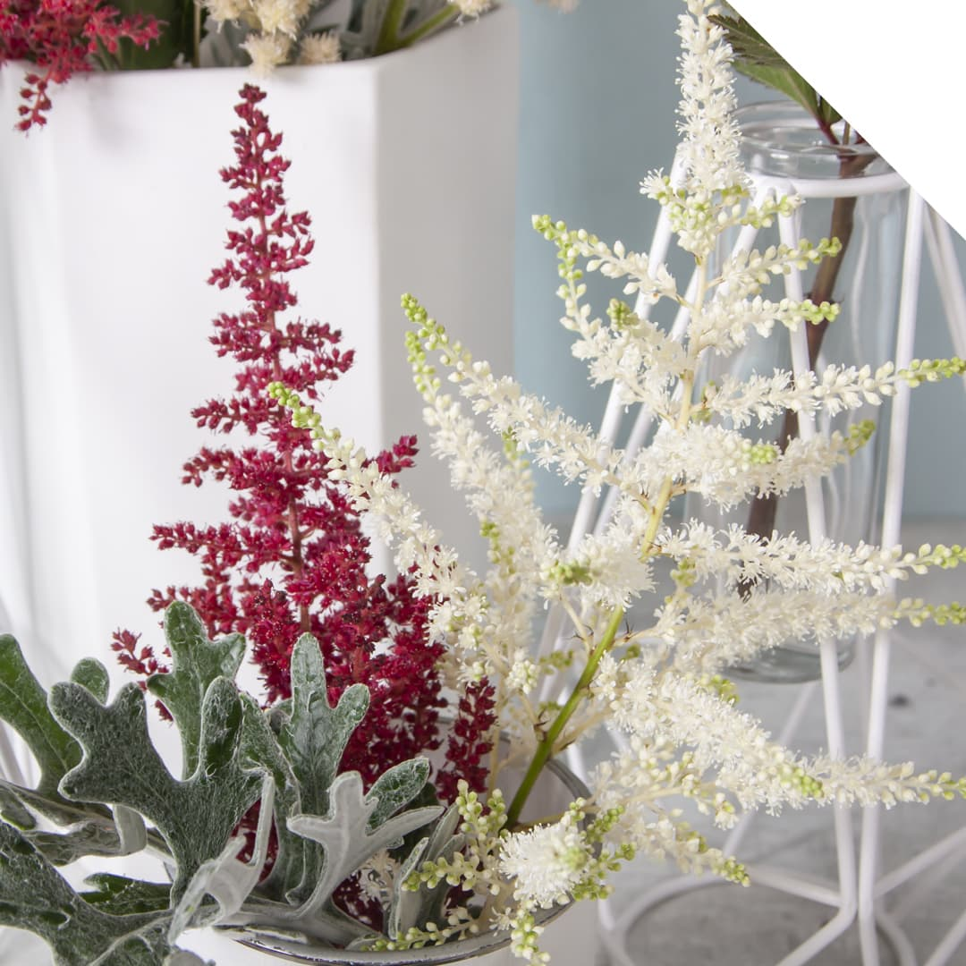 Astilbe | Holex Flower
