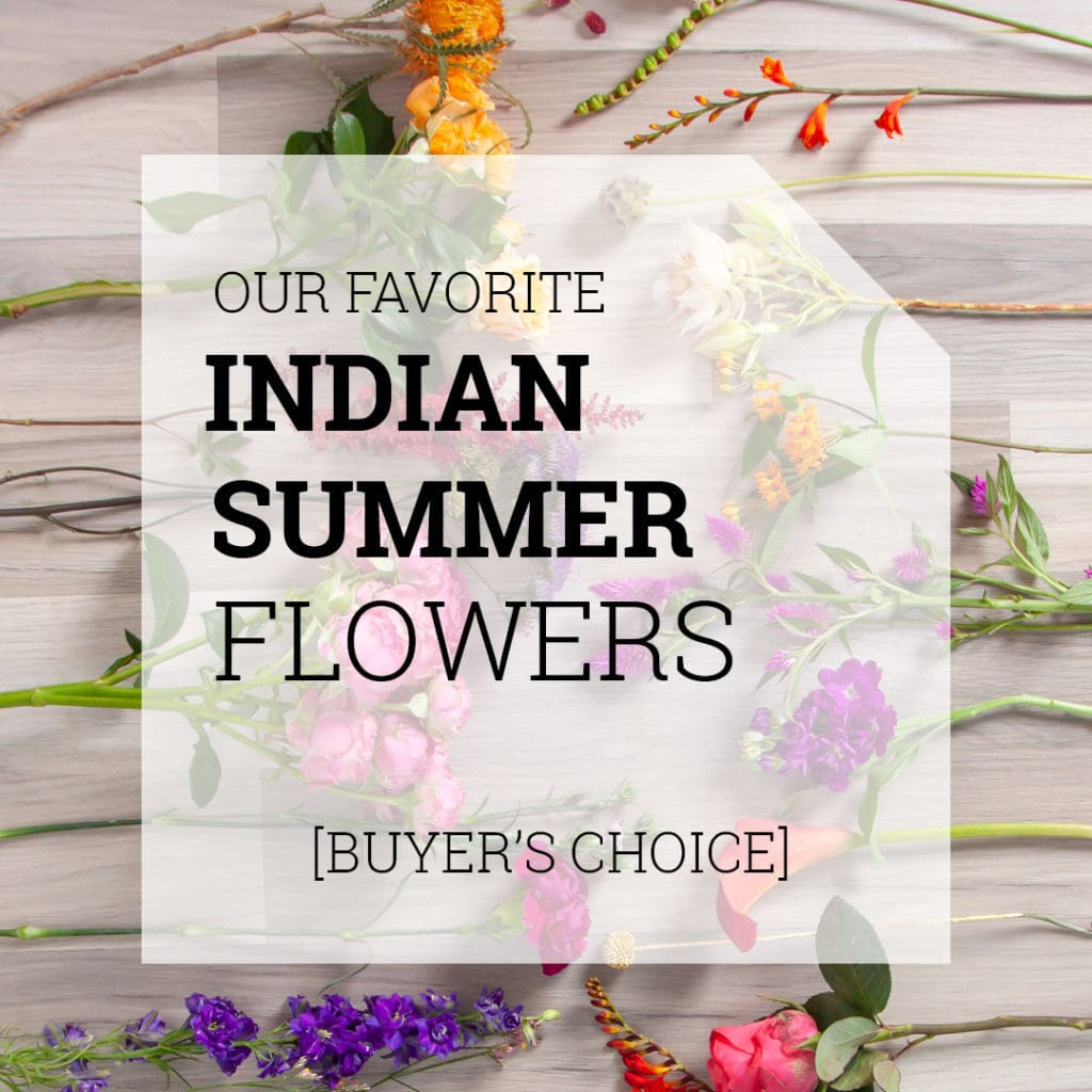 Indian Summer Flowers | Holex Flower