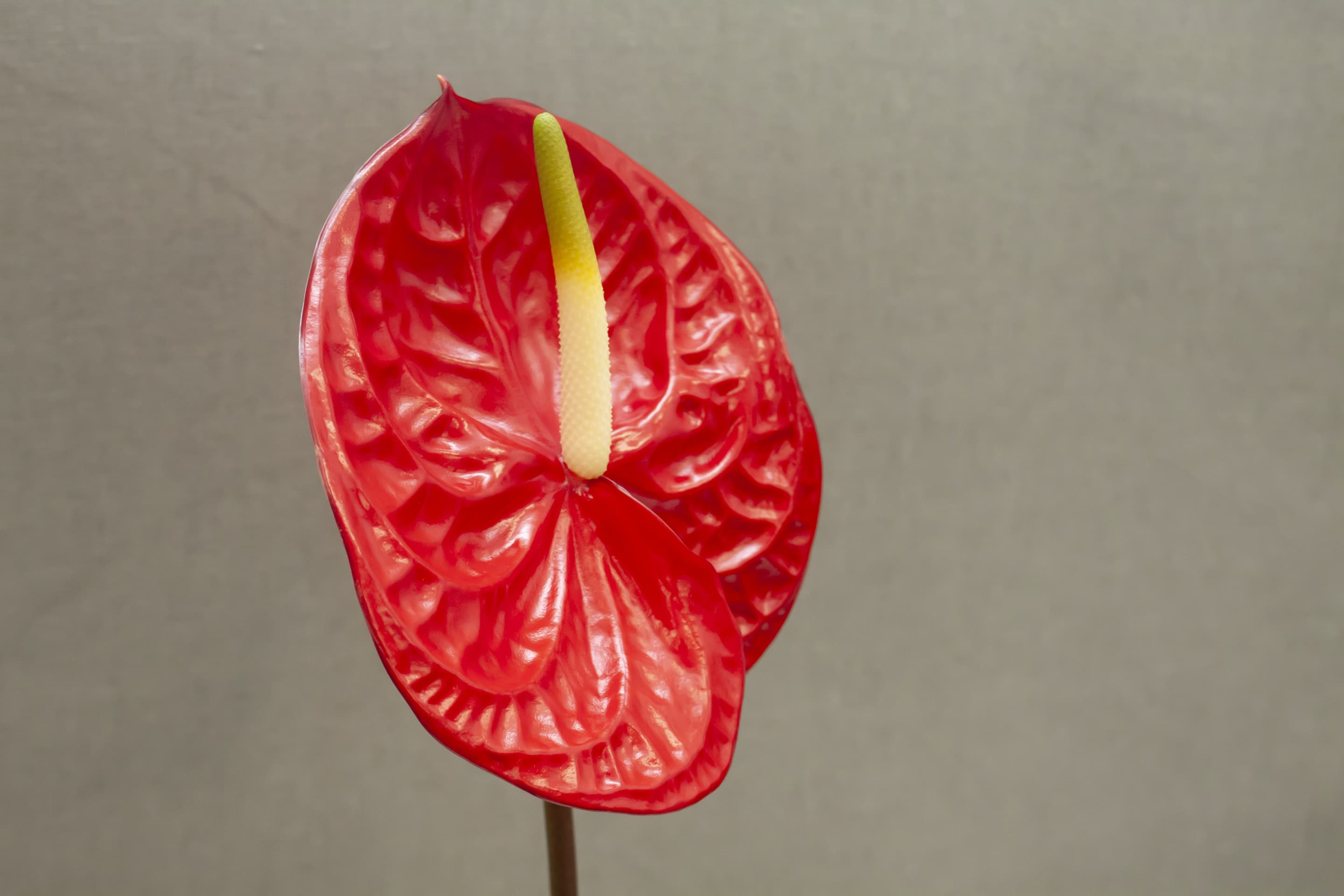 Fiore Anthurium Red | Holex Flower