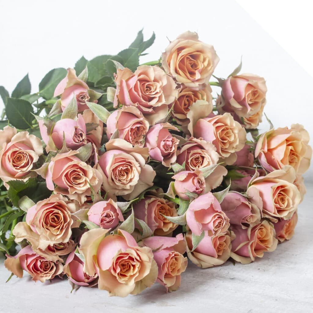 Spray Rose Antigua | Holex Flower