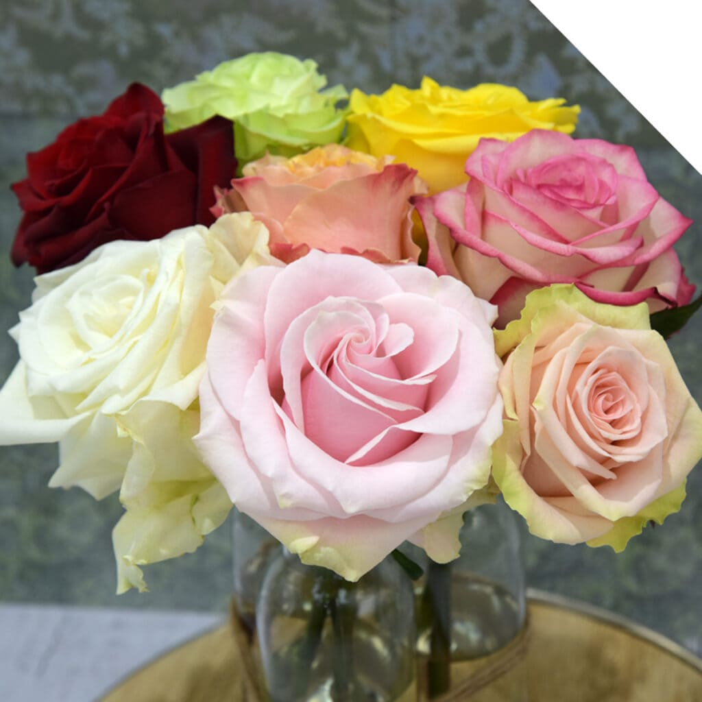 Colored Roses that are suitable for Valentines Day
