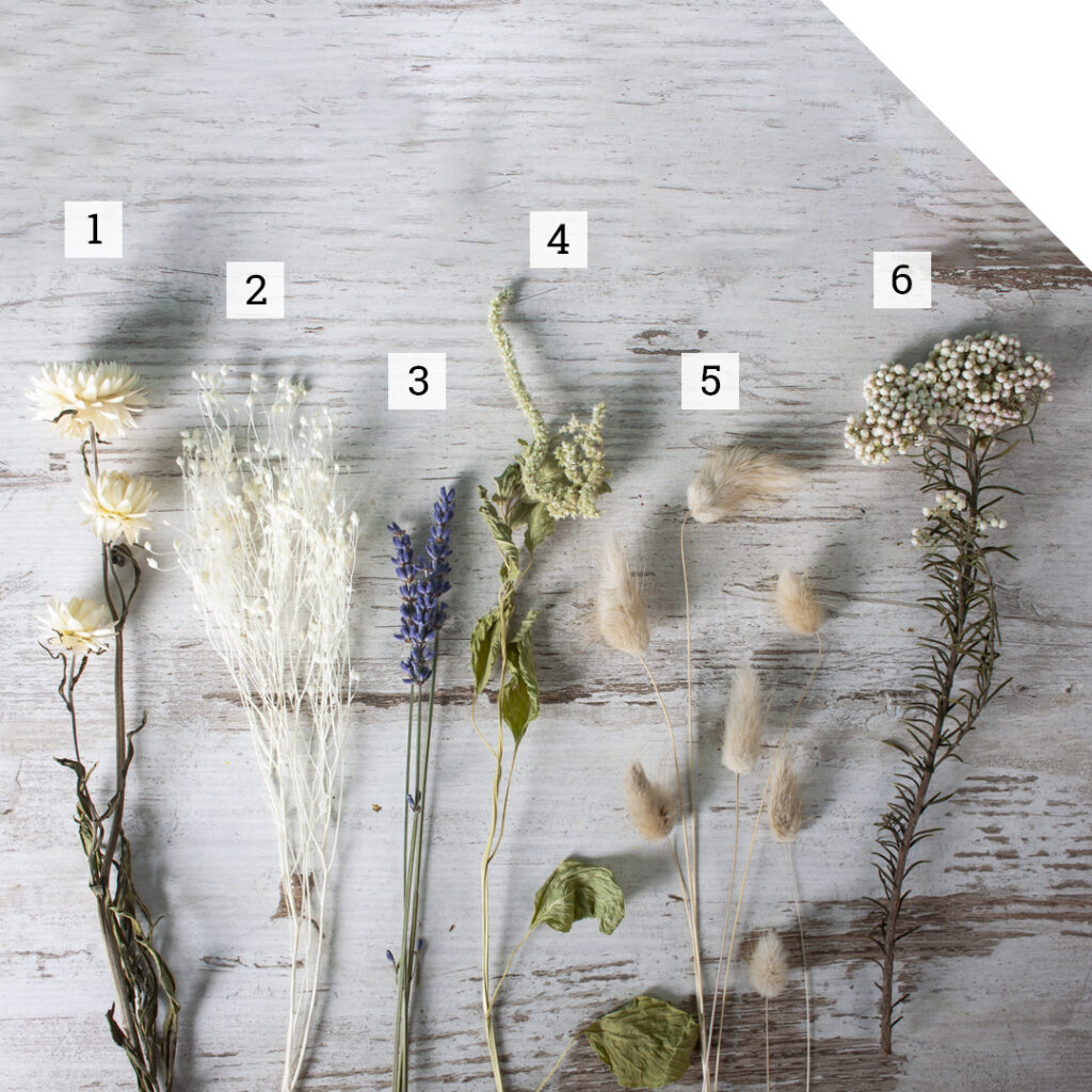 Dried Flowers Varieties | Holex Flower