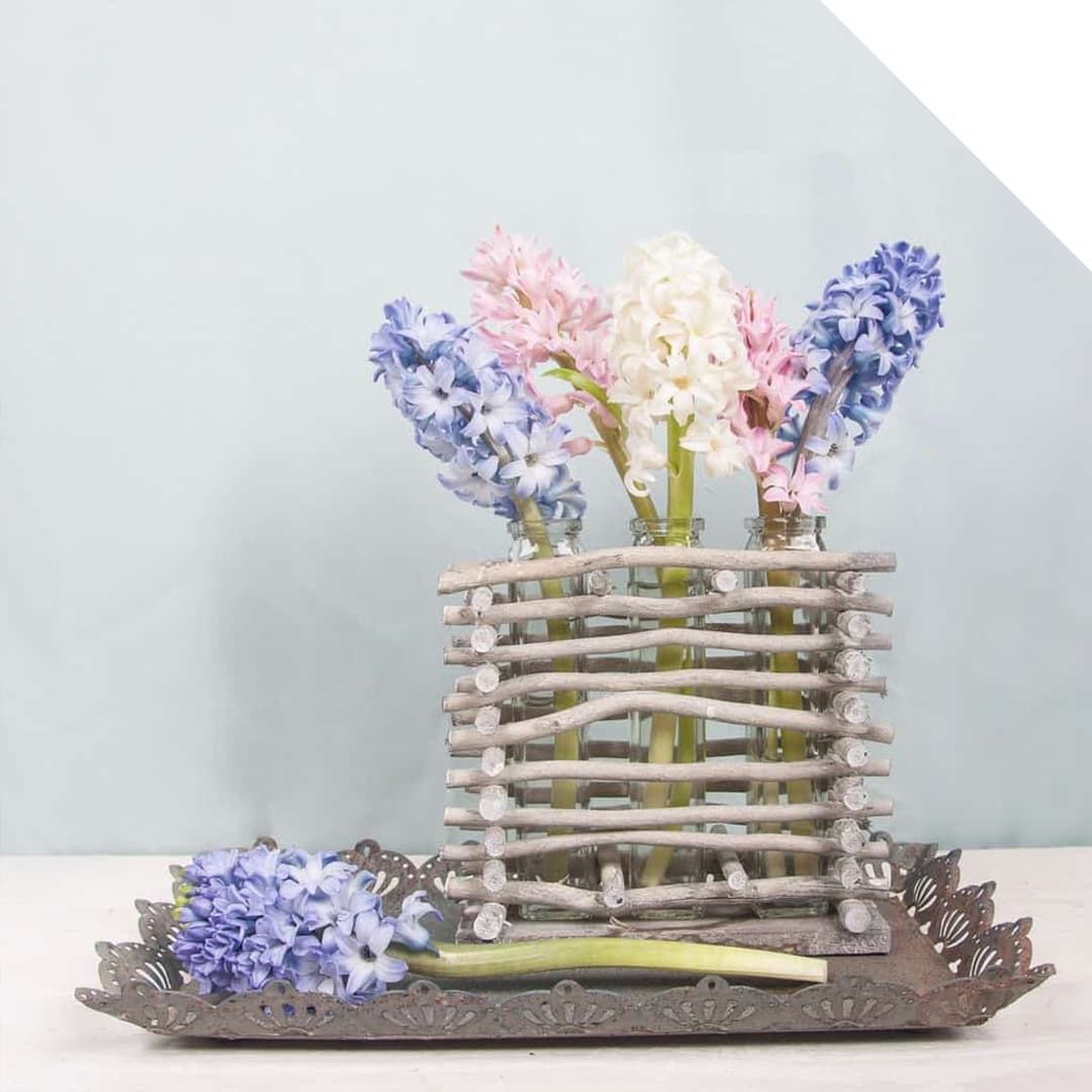Blue, white and pink Hyacinth