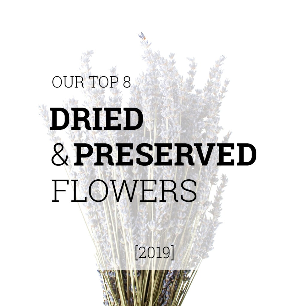 Dried and preserved flowers | Holex Flower