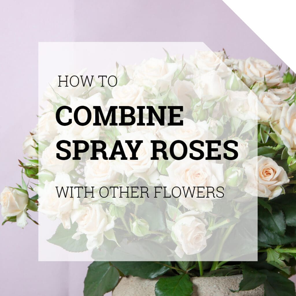 How to Combine Spray Roses