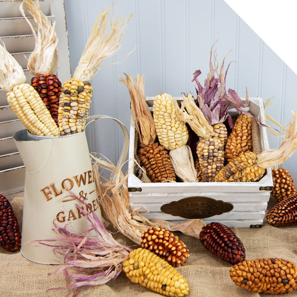 Ornamental Corn | Holex Flower