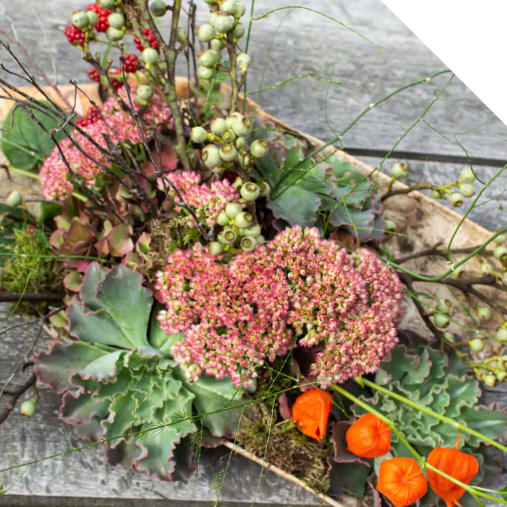 Fall Centerpiece with Sedum | Holex Flower