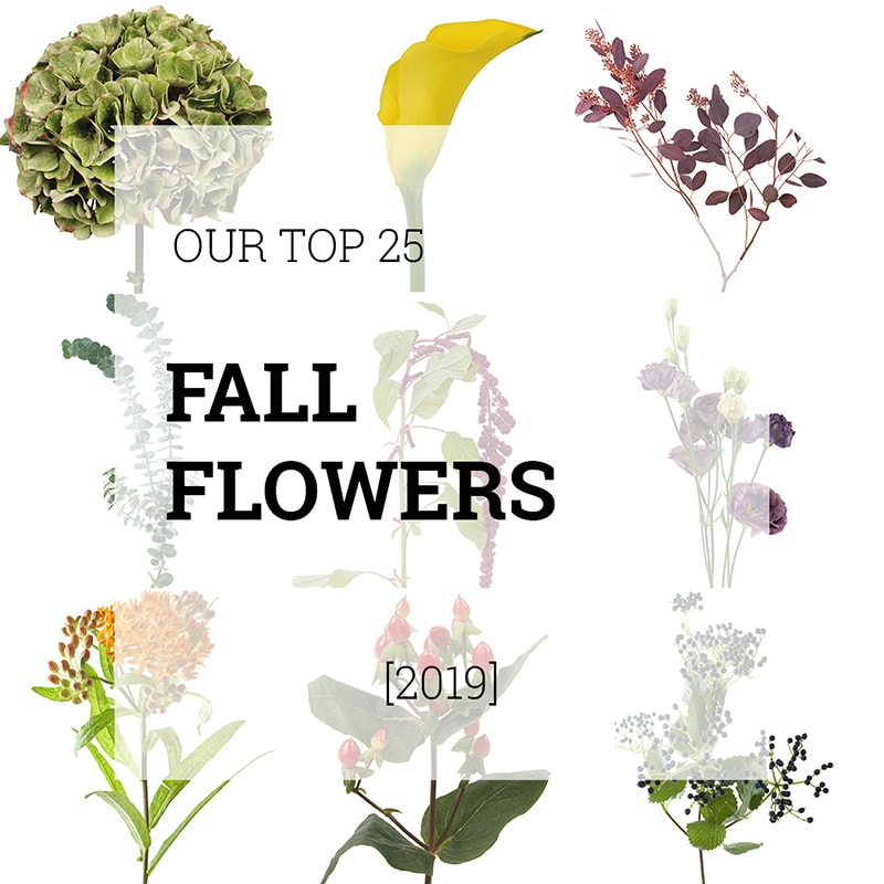 Featured-Top-25-Fall-Flowers | Holex Flower