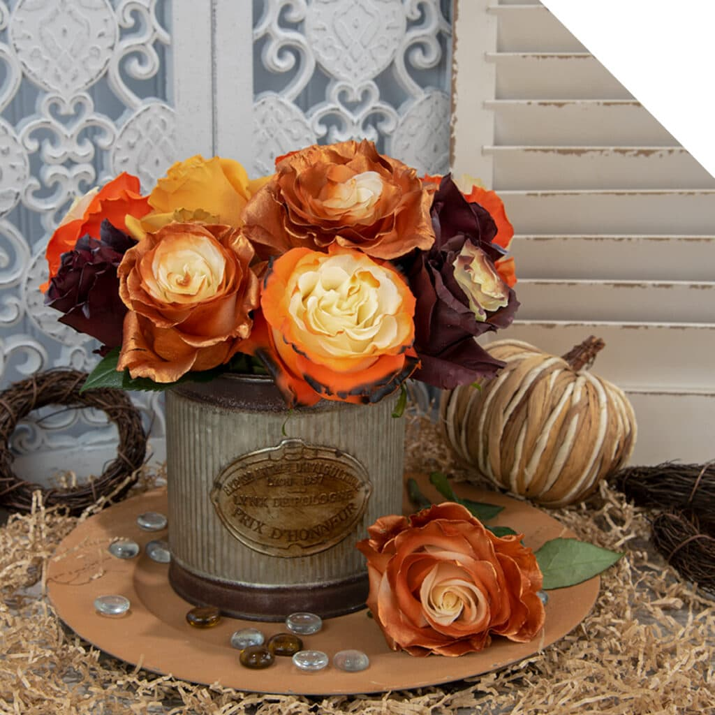 Halloween and Fall Roses for wholesale