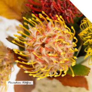 The characteristic Pincushion
