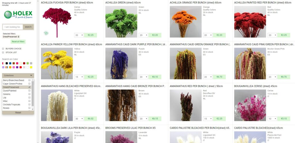 dried flowers wholesale in the holex flower webshop