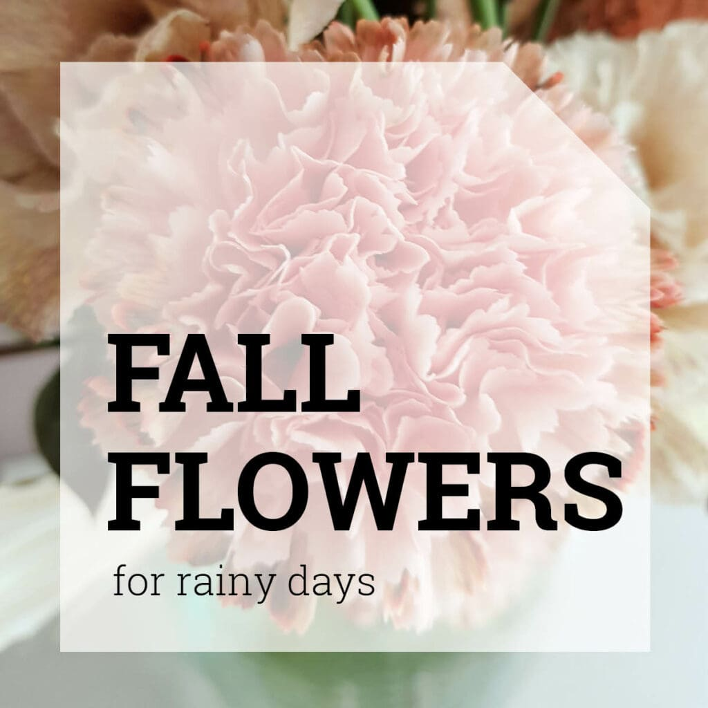 Fall Flowers for Rainy Days