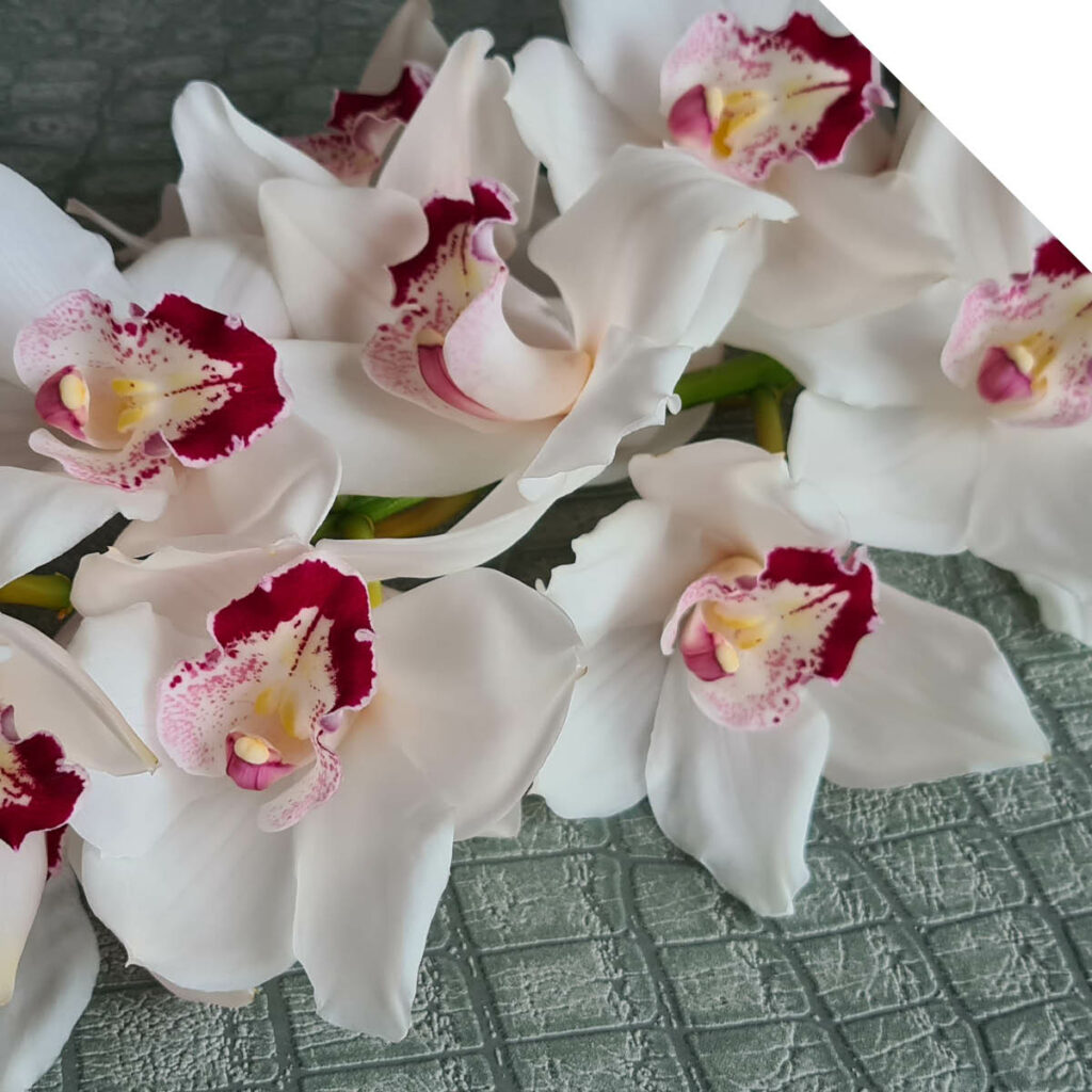 Cymbidium Amy Liv | Holex Flower